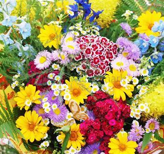 Květina 01