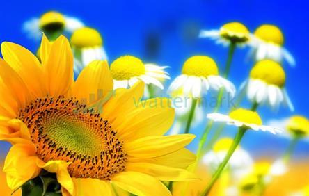 Květina 02