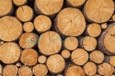 Dřevo 04